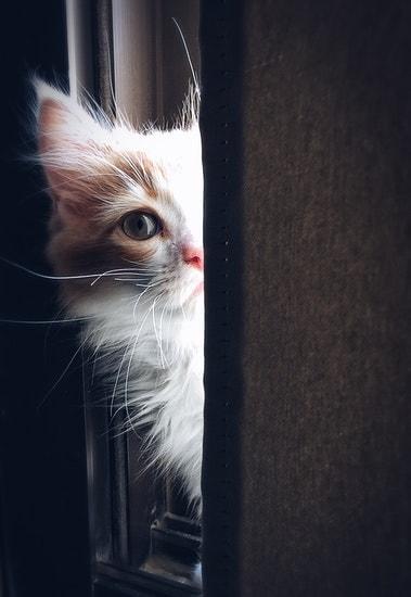 peeping through door