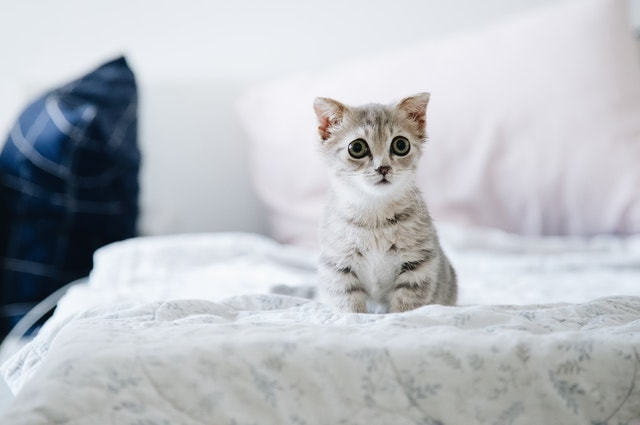 baby kitten on bed