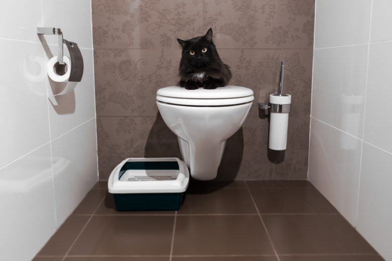 toilet time for cat
