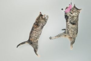 jumping-cute-playing-animals-min