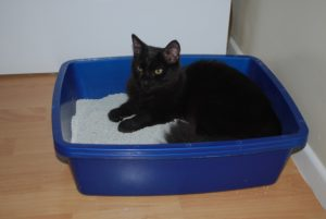 cat sitting in box that's blue