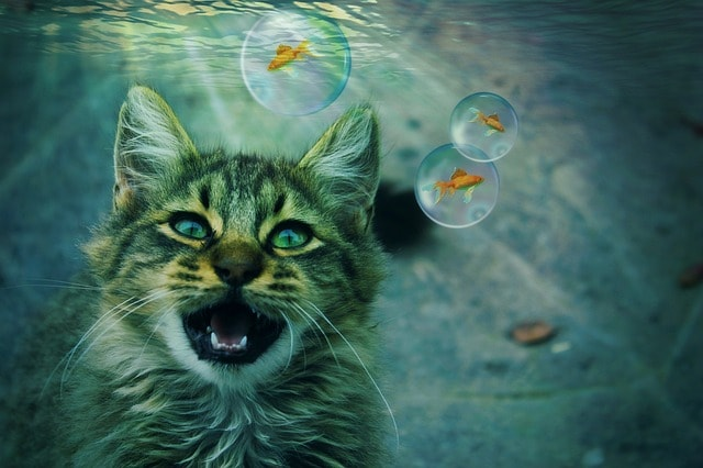 cat drown fear of water