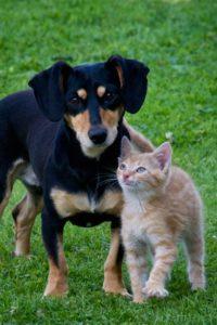 dog in cat's litter box