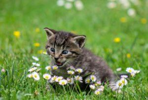 train kitten to use litter box