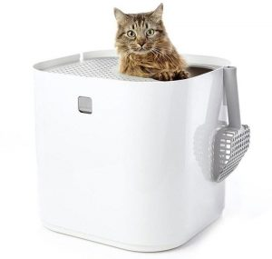 cat in modkat litter box