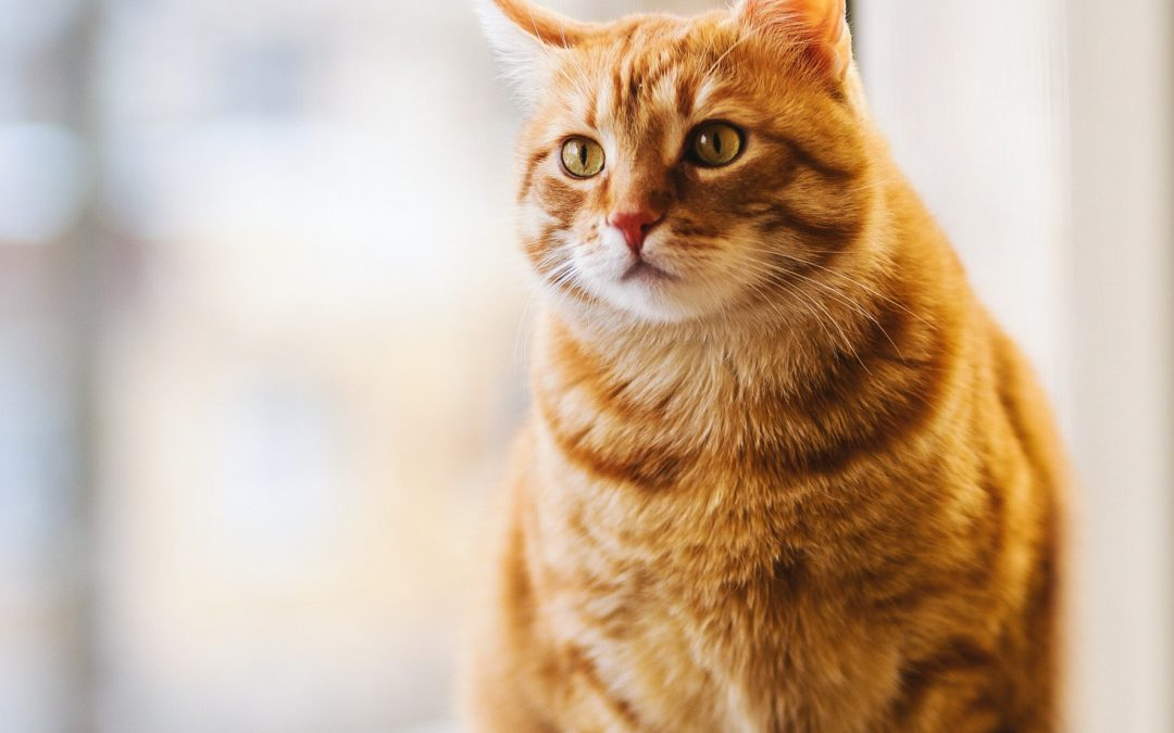 The Best Cat Foods for Sensitive Stomachs 2019