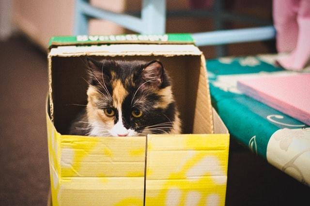 modkat box