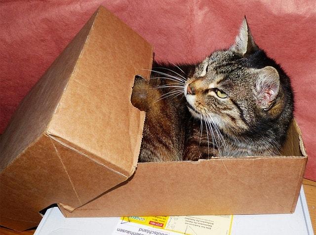 ScoopFree Litter Box Review